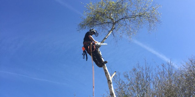 commercial tree surgery service